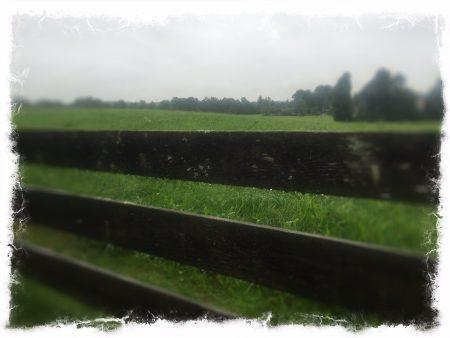 rain_in_august
